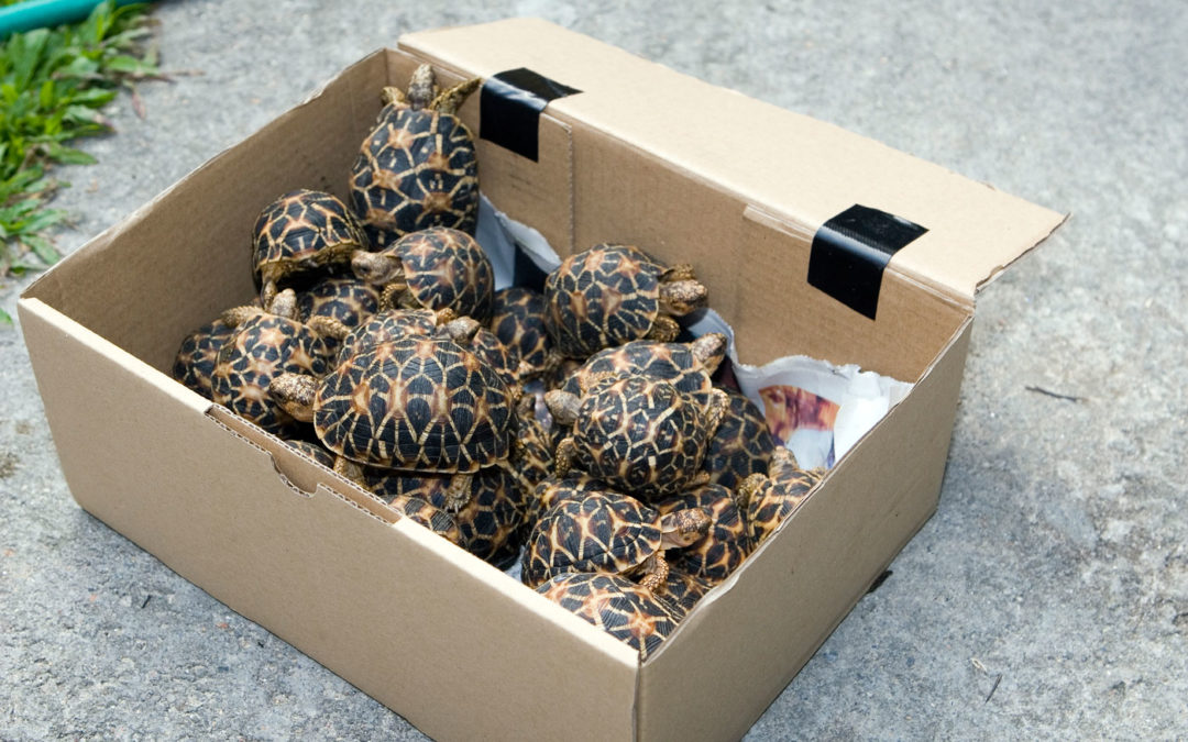 European Union key player in trafficking of Sri Lankan reptiles