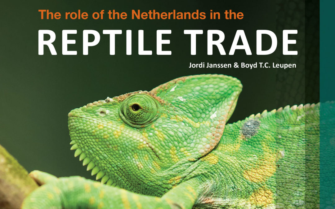 The role of the Netherlands in the reptile trade