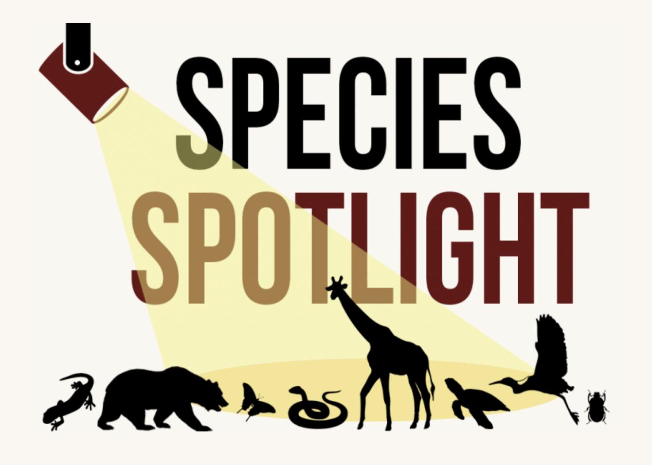 species spotlight